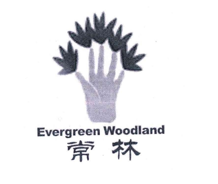 常林;EVERGREEN WOODLAND